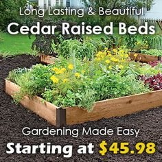 Long Lasting And Beautiful Cedar Raised Garden Beds