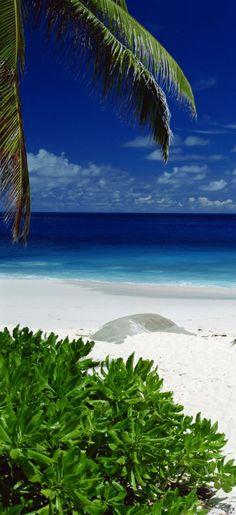 Praia de Itaparica, #Bahia, #Brazil #Brasil http://state-of-bahia.brazilforyou.com/
