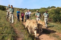 Botlierskop Private Games, Game Reserve, Own Home, South Africa, Westerns, Safari, Activities, Gallery, Animals