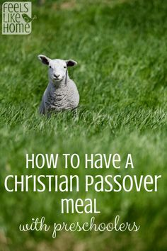 How to Host A Christian Passover Seder Meal with Preschoolers - This is a meaningful and special way to celebrate a meal that Jesus celebrated when He walked the earth.