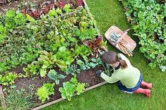 How to Start a Vegetable Garden.    Cultivating basic knowledge and ideas :)