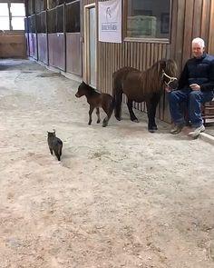 Super Cute Animals, Cute Little Animals, Cute Funny Animals, Cute Cats, Funny Cats, Funny Horse Pics, Funny Horse Videos, Cute Animal Videos, Cute Horses