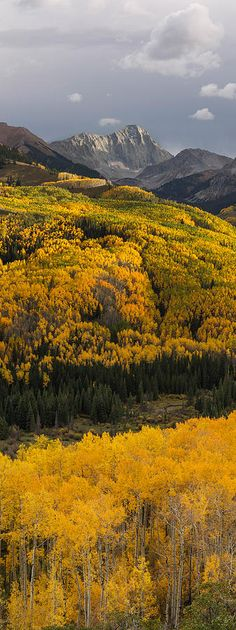 Capitol Peak Vertical Panorama Photograph  This tall panoramic image was photographed near the start of the Capitol Creek trail-head in the Elk Mountains near Snowmass, Colorado.  Mountain photography by Aaron Spong