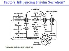 It is important to remember that insulin secretion is the result of changes in the ß-cell's membrane potential and calcium-dependent action potentials. All cellular modifications can influence these processes and, therefore, the beta cell's rate of insulin secretion. The system is quite sensitive to a wide variety of physiological factors.