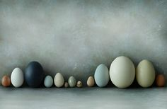 love this, the colors, the amazing variety of eggs nature provides Horizontale compositie