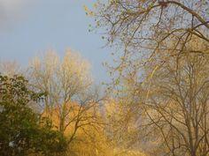Koningsdag 2017.   Bewolkt en af en toe de zon erbij. Zo kon ik vanuit huis mooie foto's van de langs trekkende wolken maken. De rommeltjes op de markten, bekijkt mijn moeder