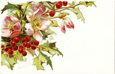 free holiday clip art | CatnipStudioCollage-: Free Vintage Clip Art - Christmas Holly and ...