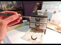 How to build a mealworm farm! this is a video about how to build a self sorting mealworm farm! Bearded Dragon Terrarium, Bearded Dragon Cage, Bearded Dragon Habitat, Bearded Dragon Breeding, Bartagamen Terrarium, Reptile Terrarium, Leopard Gecko Habitat, Leopard Geckos, Mealworm Farm