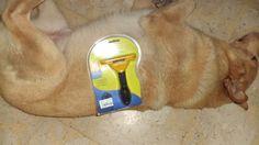 Spazzola per cani Furminator professionale