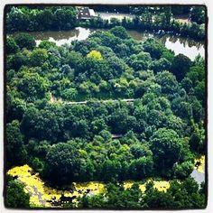 Zaterdagmiddag 9 juli is één van de groenste forten van de #StellingvanAmsterdam weer geopend. En ergens in dit 'bos' hangt ook een van onze #Stampions! #FortbijAbcoude #Abcoude #werelderfgoed