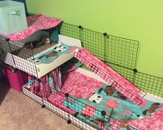 Image result for plexiglass guinea pig cage