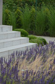 lavandula with stipa malkul modern garden