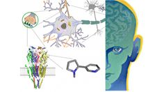 """You'll learn how drugs enter the brain, how they act on receptors and ion channels, and how """"molecular relay races"""" lead to changes in nerve cells and neural circuits that far outlast the drugs themselves. """"Drugs and the Brain"""" also describes how scientists are gathering the knowledge required for the next steps in preventing or alleviating Parkinson's, Alzheimer's, schizophrenia, and drug abuse."""