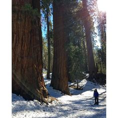 Sequoia National Park. Watch the entire episode here #monicagoes
