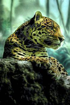Amazingly beautiful jaguar picture