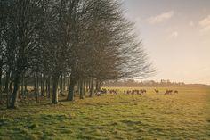 Phoenix park, Dublin by Davide Mantovanelli on Landscape Pictures, Dublin, Phoenix, Landscapes, Country Roads, Park, Dancing, Paisajes, Scenery Paintings