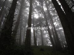 """""""Redwood Shadows and Light"""" by Dan Reed, Middlebury, VT //  // Imagekind.com -- Buy stunning, museum-quality fine art prints, framed prints, and canvas prints directly from independent working artists and photographers."""