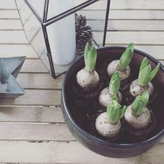 Christmas green #hyacint #tinekhome #bonytt