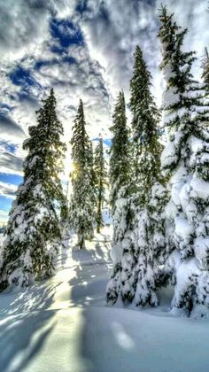 """""""Those are marshmallow clouds being friendly, in the arms of the evergreen tree"""" Winter Pictures, Nature Pictures, Cool Pictures, Beautiful Pictures, Winter Szenen, Winter Magic, Winter Photography, Landscape Photography, Nature Photography"""