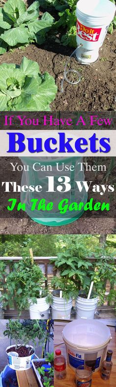 If You Have a Few Buckets You Can Use Them These 13 Ways In The Garden | Bucket Uses | Balcony Garden Web