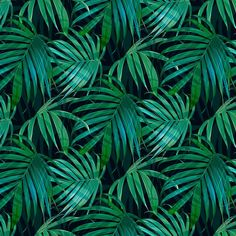 Botanical Wallpaper, Plant Leaves, Wallpapers, Plants, Pictures, Exotic, Photo Wallpaper, Wallpaper, Plant