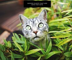 Search for customizable Cat posters & photo prints from Zazzle. Photo Chat, Cat Posters, Curious Creatures, Belle Photo, Pet Care, Indoor Plants, Cute Dogs, Funny Cats, Kitten