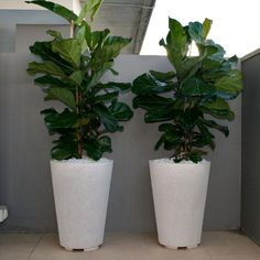 Feature Pots for Small Spaces