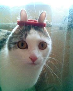 oh. cat sportif