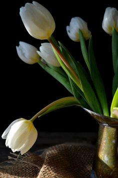 Heart of Gold Petal by Petal:: Tulip