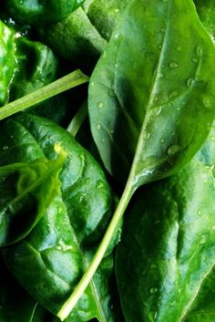 The 100 Best Foods You Could EVER Eat for Your Body