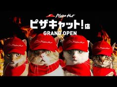 "【特報】ピザキャット!店 GRAND OPEN | ""Grand Opening! -Pizza Cat! Store-"" - YouTube"