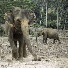 Orphelinat aux Elephants #2
