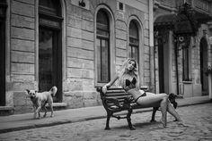 Wldcat and homeless dog by Arkadiy Kurta