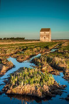 La Albufera, arrozales y surcos (rice fields or paddies & furrows) by José Manuel Hermoso | 22 octubre 2012 | Valencia, Spain