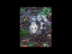 A Legszebb Állatos Családi Képek Amiket Valaha Láttál - YouTube