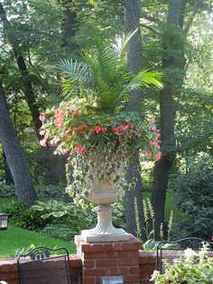 palm, dragon wing begonia and ivy. beautiful.
