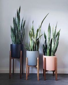 26 Gorgeous Interior Design with Indoor Plants As discussed before, interior decoration is seldom taken on because of the light of center. Indoor plants ought to be an essential part of every interior. Living Room Decor, Bedroom Decor, Bedroom Plants, Indoor Planters, Plants Indoor, Indoor Cactus, Hanging Plants, Indoor Gardening, Air Plants