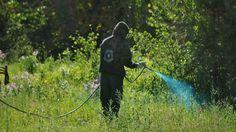 6 herbicidas caseros amigables con el ambiente