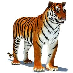 Tiger Animated - is a high quality model to add more details and realism to your rendering projects. Fully rigged and animated model of tiger. Tiger Fur, Cartoon Tiger, Tiger Pictures, Big Cats, Lions, Cute Animals, Animation, Models, Projects
