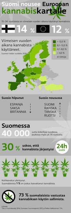 Kannabis infographic - @ Stina Tuominen