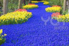keukenhof-gardens--lisse--netherlands-a989e7