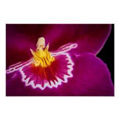 Flor 14 Orquídea Carmin Posters