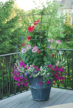 Container Gardening - Deborah Silver