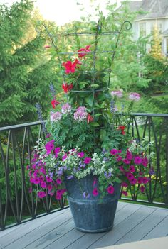 1000 images about landscaping with planters and containers on pinterest container garden - Growing petunias pots balconies porches ...