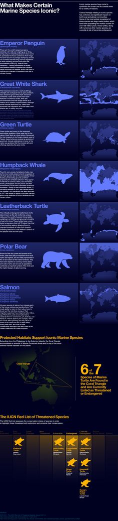 INFOGRAPHIC: Iconic Marine Species. Let's protect them!