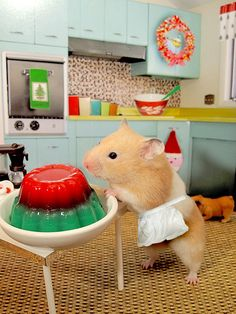 Hamster with Festive Jello (if cooking or being in the kitchen were anything like this I might actually do it more!)