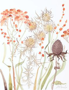 Meadow with Thistle & Crocosmia - Angie Lewin Art And Illustration, Watercolor Illustration, Art Floral, Watercolor Drawing, Watercolor Paintings, Watercolours, Amazing Drawings, Art Drawings, Angie Lewin