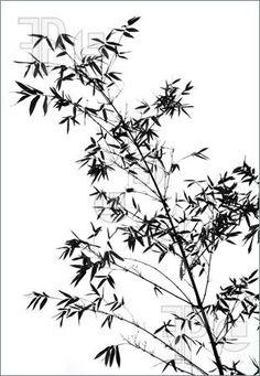 http://www.featurepics.com/FI/Thumb300/20080927/Bamboo-Tree-Outline-909921.jpg