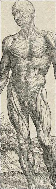A man with his skin off, stands in front of a landscape. Cropped, from Andreas Vesalius,  De Humani Corporis Fabrica... (Basel, 1543). Woodc...