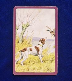 1940s English pointer dog art playing trading card. Playing and trading cards are fun to collect by breed. They look great when grouped